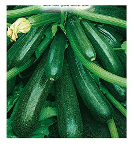 75 c.ca semi zucchino diamant hybrid - cucurbita pepo - in confezione originale - prodotto in italia - zucchine - zi015-a
