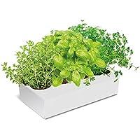 Huerto Urbano KIT Cultivar Especias en tu Cocina - Caja con 4 Aromáticas: Cilantro,