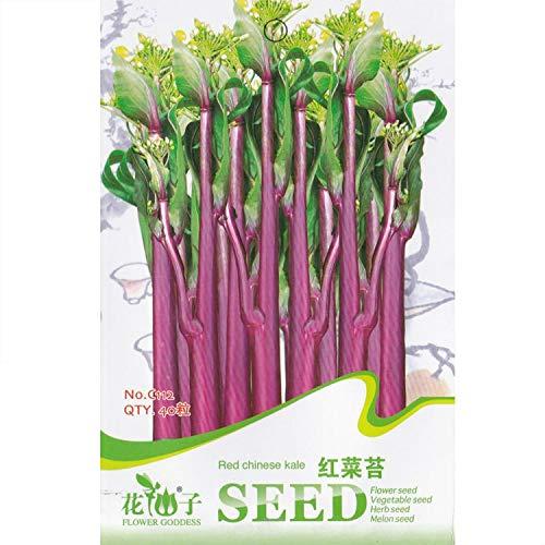 FERRY HOCH KEIMUNG Seeds Nicht NUR Pflanzen: RedKale * 1 Packet 40 & # 39; s (PC) * Gemüse Samen * Ernährung Spezielle Gemüse: 1 Packet