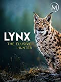 Lynx: Elusive Hunter