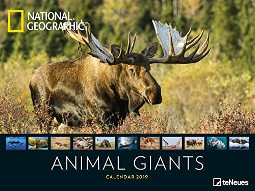 National Geographic Animal Giants 2019 - Tierkalender, Wandkalender, Posterkalender, Naturkalender 2019  -  64 x 48 cm -