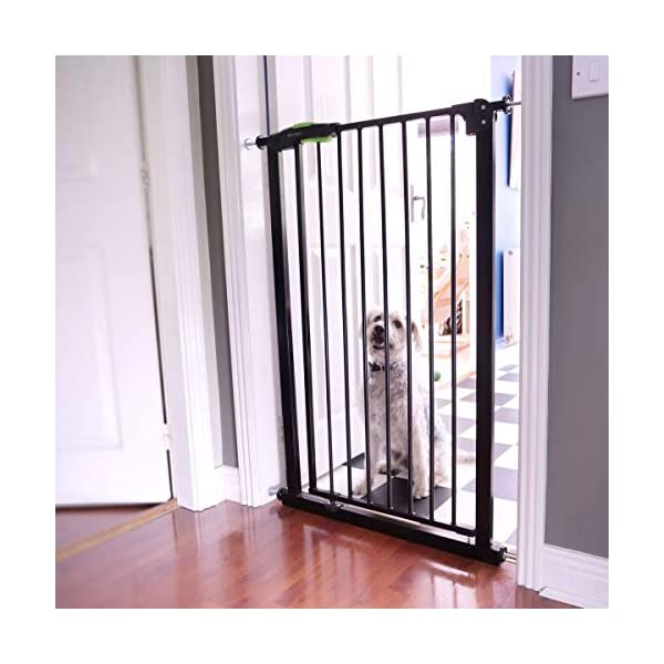 "Venture Q-Fix Extra Tall Pressure Fit Pet Safety Gate | 75-84cm Wide, 110cm Extra Tall | Unique 90° Two Way Open/Stay Door, Auto Close Fuction (Black, 75-84cm) Dog Gate Venture Expands to fit openings, doorways and hallways 75-84 cm wide; stands 110 cm tall. and is suitable for Larger Pets and Toddlers This tall gate must be fully assembled in opening. See user manual. - **New Unique 90° Two Way Open and Stay Door** Pressure mounted ""wall saver"" design is easy to set up with no tools requires; Also, includes 4 wall cups for added security 2"