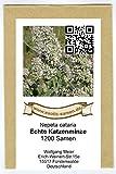Echte Katzenminze (Citralfrei - nur das mögen Katzen) - Nepeta cataria - Zier-/Arzneipflanze - 1.200 Samen