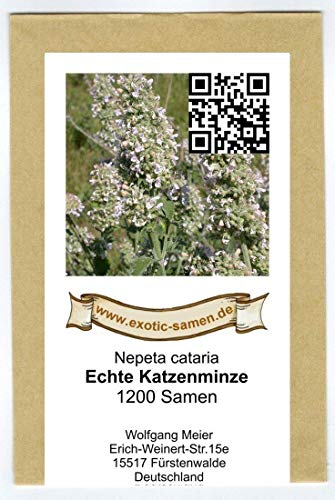 itralfrei - nur das mögen Katzen) - Nepeta cataria - Zier-/Arzneipflanze - 1.200 Samen ()