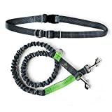 Mighty Paw Hands-Free, Shock Absorbing, Running Leash. Our Bungee Leash Extends an extra