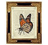 Schmetterling Monarch Falter Poster Kunstdruck auf antiker Buchseite Insekt Geschenk Bild ungerahmt