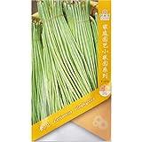 Doliques Bean Seed * 50 graines) * Vigna unguiculata Sesquipedalis * Les haricots nouilles chinoises * Les haricots longs chinois, haricots asperges