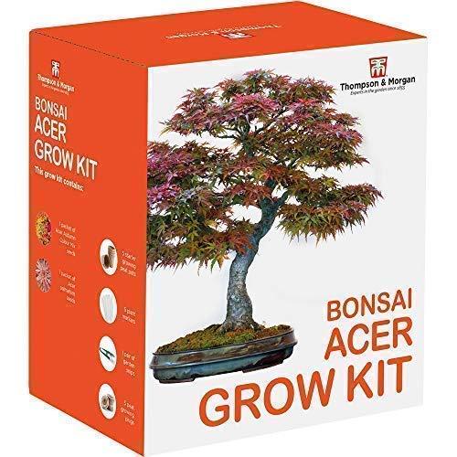 Acer Bonsai Pflanze Samen Wachstums Set Bauen Sie Ihr Eigenes an Bonsai Bäume, Great Gärtner S Geschenk, Acer Herbst Mix und Palmatum mit Wachsende Ausrüstung von Thompson und Morgan