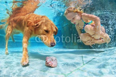 Wunschmotiv: Little child play with fun and train golden labrador retriever puppy in swimming pool - jump and dive underwater to retrieve shell. Active games with family pets and popular dog breeds like companion. #105193571 - Bild als Foto-Poster - 3:2 - 60 x 40 cm / 40 x 60 cm