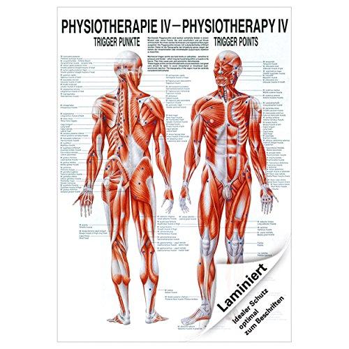 Sport-Tec Triggerpunkte Mini-Poster Anatomie 34x24 cm medizinische Lehrmittel - Mini-poster