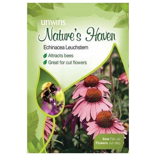 Unwins Nature Echinacea Leuchstern Semi Del Porto