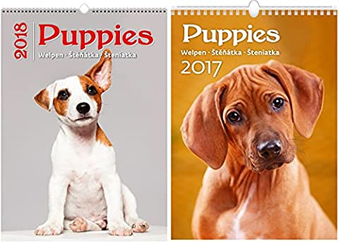 C171-17-18 Kalpa Wall Calendar 2018 Puppies 24 x 33 cm + Buy 1 Get 2 free Calendar C171-17