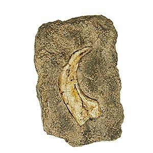 Geoworld cl081K-Dig & Discover, Fossil Replica, Velociraptor Claw