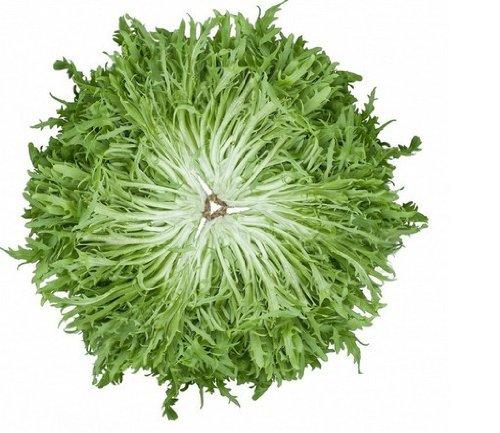 SD0341 vert Graines Bitter laitue de légumes, salade de roquette à rendement élevé Graines de légumes, semences non génétiquement modifiés (60 Seeds)