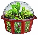 DuneCraft 22845Kuppel-Terrarium für fleischfressende Pflanzen