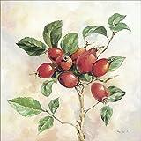 Artland Qualitätsbilder I Wandbilder selbstklebende Wandfolie 100 x 100 cm Botanik Pflanzen Malerei Creme A5PW Hagebutten