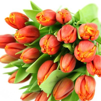 floristikvergleich.de Echte rote Tulpen im Bund – Frühlingsblumen