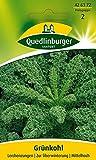 Kohlsamen - Grünkohl Lerchenzungen von Quedlinburger Saatgut