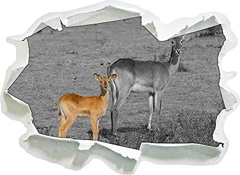 magnifique Gazelle indienne avec douce jeune taille d'autocollant noir blanc,