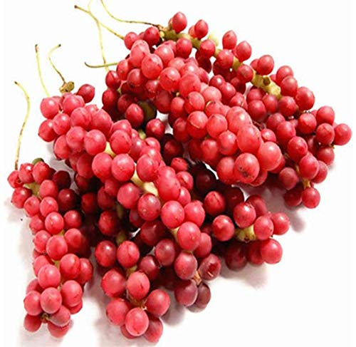 KINGDUO Egrow 100Pcs/Pack Schisandra Seeds Chinese Magnolia Rebe Obst Pflanze Seeds -
