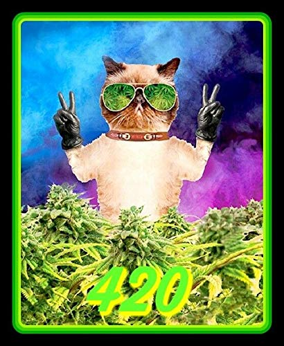 Yilooom Pothead Pussy Cat Vinyl Decal Sticker for Laptop Fridge Guitar Car Motorcycle Helmet Toolbox Luggage Cases 10 Inch In Width