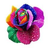 Decdeal 5 Stück Bunte Rose Samen Regenbogen Rose Samen