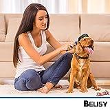 Hundebürste/Katzenbürste von BELISY – professionelle Fellpflege für Hund & Katze – Doppelseitig & flexibler Griff – Unterwolle & Verfilzungen kinderleicht entfernen – Hundekamm – Katzenkamm – Fellbürste – für Kurzes, Mittleres & Langhaar – Unterfellbürste – Fellstriegel – inkl. wichtiger Fell-Pflege Tipps für Dein Tier (Blau) - 2