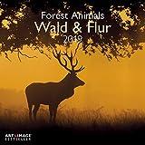 Wald & Flur 2019 - Naturkalender, Tierkalender, Landschaftskalender 2019 - 30 x 30 cm