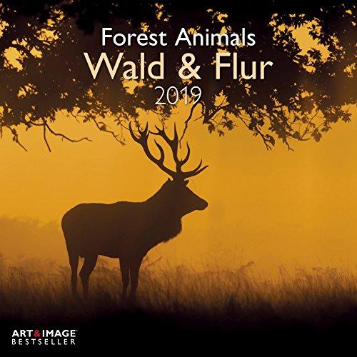 Wald & Flur 2019 Broschürenkalender: Forest & Meadow Animals