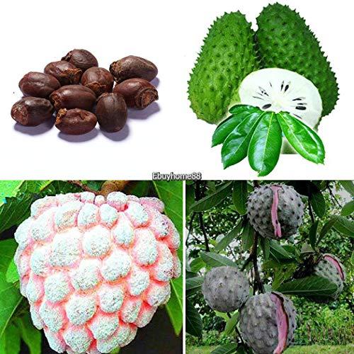 Go Garden Type2: 10Pcs jardin délicieux fruits Arbre Lychee Graines Ehe8