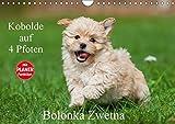Kobolde auf 4 Pfoten - Bolonka Zwetna (Wandkalender 2017 DIN A4 quer): Lassen Sie sich verzaubern von einer entzückenden Hundefamilie (Geburtstagskalender, 14 Seiten ) (CALVENDO Tiere)