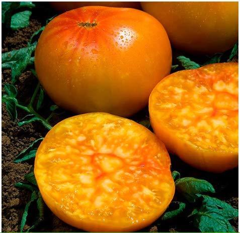 Tomasa Samenhaus- 100 Stück Tomatensamen Ananas Winterhalbzigarre von Madeira,Garten Bio leckere Gemüsetomaten Gemüse Saatgut mehrjährig winterhart Tomaten