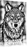 Monocrome, Wachsamer Wolf , Format: 80x60 auf Leinwand, XXL riesige Bilder fertig gerahmt mit...