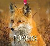 Füchse: Original Stürtz-Kalender 2020 - Mittelformat-Kalender 33 x 31 cm