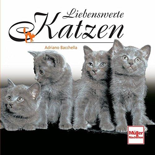 Somali-katze (Liebenswerte Katzen (Geschenkbücher))