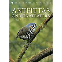 Antpittas and Gnateaters (Helm Field Guides)