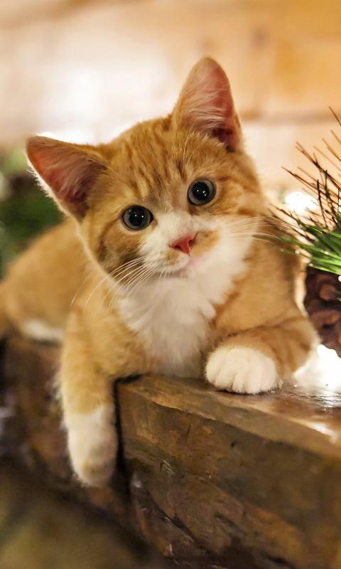 Cat Wallpaper Amazon Co Uk Appstore For Android