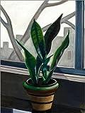 Posterlounge Forex-Platte 120 x 160 cm: Pflanze auf Einem Fensterbrett von Prudence Heward