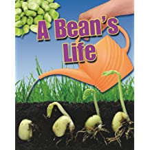 A Bean's Life (Crabtree Connections, Band 1)