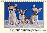 Chihuahua Welpen und Freunde (Tischkalender 2017 DIN A5 quer): Welpenbilder der kleinsten der Kleinen (Monatskalender, 14 Seiten ) (CALVENDO Tiere)