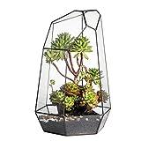 NCYP Custom Made Super Large 41cm Height Irregular Prism Glass Geometric Terrarium Box Tabletop Succulent Plant Planter Flower Pot Fern Moss lLarge Tall 23cm x 26.5cm x 41cm