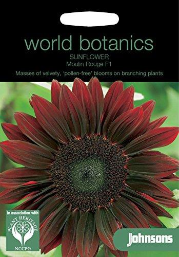 Johnsons Welt Botanics Blumen Bildhaftes Paket Sonnenblume Moulin Rouge F1 20 Samen -