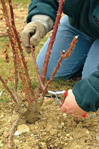 Felco 10 Baum, Reb und Gartenschere, Linkshänder, rot