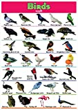 Birds Name Printed Poster | Educational Poster | Kids Learning Wall Chart- 100yellow