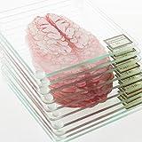 Brain Specimen 10-Piece Coaster Set