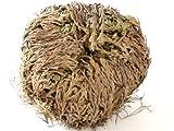 NaDeco Rose von Jericho XL Knolle | Selaginella lepydophylla | Auferstehungspflanze | Jerichorose | Wüstenrose