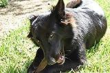 Hundesnack Rothirsch Geweih Kausnack – extra große Größe (XL) Mindestgewicht 225 Gramm (1 Stück) - 5