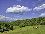 Artland Qualitätsbilder I Bild auf Leinwand Leinwandbilder Wandbilder 80 x 60 cm Landschaften Felder Foto Grün B6CC Glückliche Kühe auf der grünen Weide
