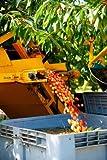 Panoramic Images – Mechanical harvester dislodging cherries into large plastic tub Cucuron Vaucluse Provence-Alpes-Cote d'Azur France Photo Print (60,96 x 91,44 cm)