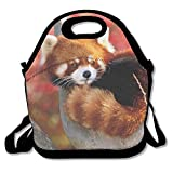 Neoprene Lunch Tote - Red Panda Waterproof Reusable - Best Reviews Guide